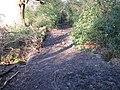 Stream crossing in Bushycommon Wood - geograph.org.uk - 1704123.jpg