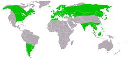 Sumpfohreule-Asio flammeus-World