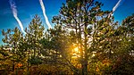 Sun Tree (40459876401).jpg