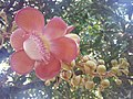 Suvarnabhumi Orchids Farm IMG 20160322 080138 (27170412900).jpg