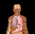 Symptoms of swine flu.png