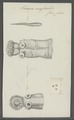 Taenia crassicollis - - Print - Iconographia Zoologica - Special Collections University of Amsterdam - UBAINV0274 105 19 0013.tif
