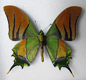 Photonic crystal - Wings of some butterflies contain photonic crystals.