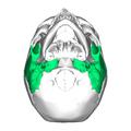Temporal bone inferior.png