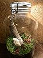 Terrarium by plantlover93.jpg