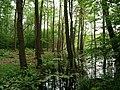 Teufelsbruch swamp next to crossing path in summer 14.jpg