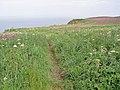 The Headland way towards Bempton Cliffs - geograph.org.uk - 835291.jpg