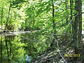 The Lawrence Brook, Monmouth Junction, New Jersey USA May 2013 - panoramio (6).jpg