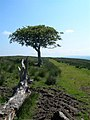 The Path the Maybole - geograph.org.uk - 464258.jpg