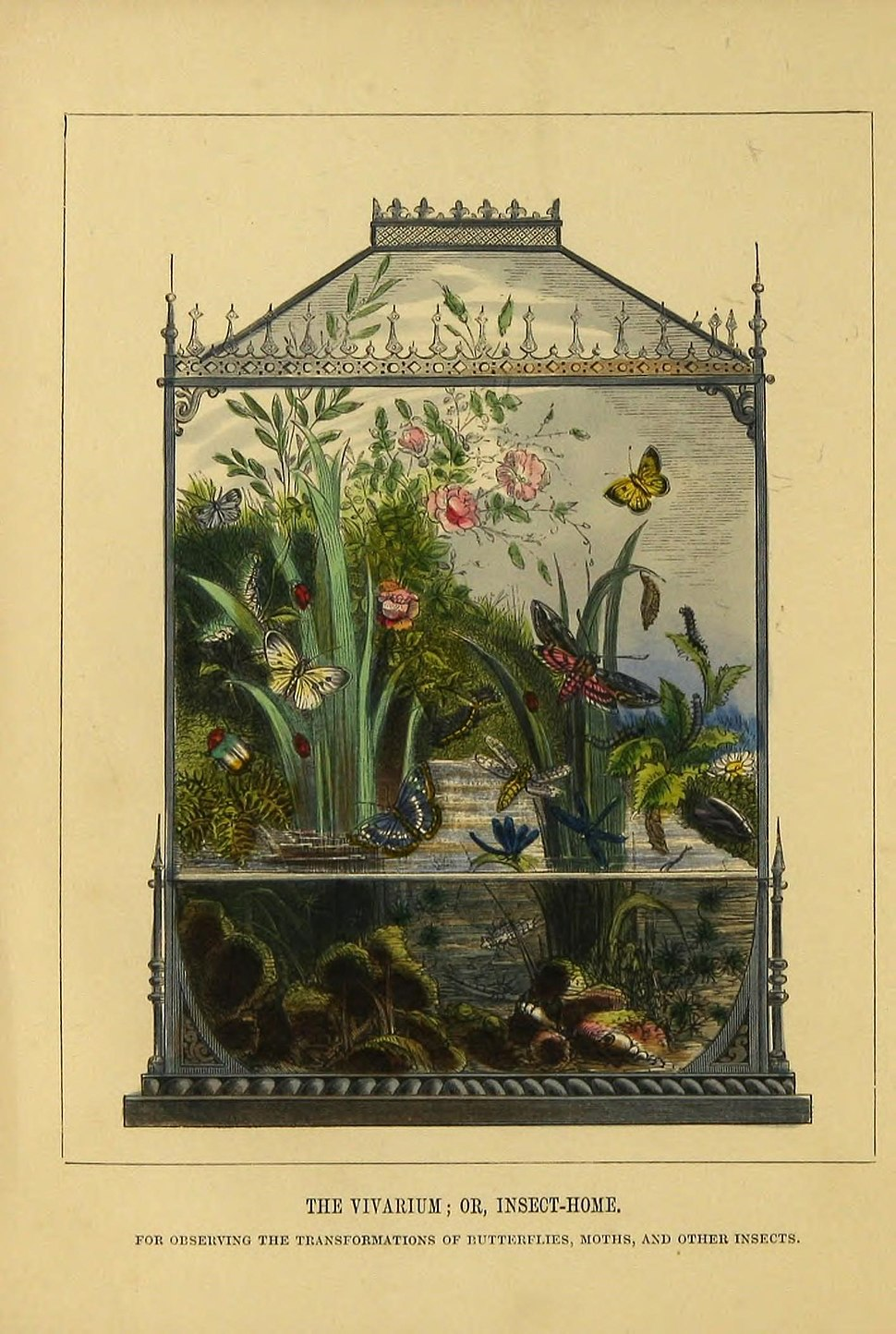 The butterfly vivarium (9445804504)