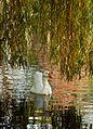 Thwaite Hall Gardens -6362 - panoramio.jpg