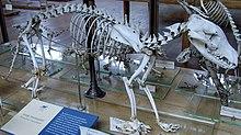lobo da tasmânia wikipédia a enciclopédia livre