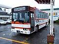 Tobudialbus-5221.jpg