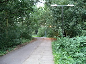 Gibbet Hill - The path through Tocil Wood