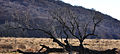 Tod im Torfmoor.jpg