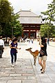 Todai-ji, Nara (3811370078).jpg