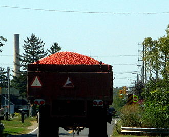 Leamington, Ontario - Tomatoes being transported in Leamington.  The smoke stack of the former Heinz processing factory can be seen in the distance on the left.
