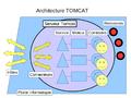 Tomcat-archi.png