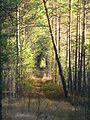 Tomsky District, Tomsk Oblast, Russia - panoramio (4).jpg
