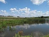 Topělecký rybník, rákosiny.jpg