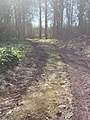 Track Into the Woods - geograph.org.uk - 767476.jpg