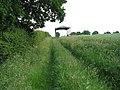 Track to Bramerton Road - geograph.org.uk - 1344149.jpg