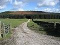Track to Rivock Plantation - geograph.org.uk - 719040.jpg