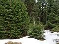 Trail from Sonnenberg to Rehberger Planweg 02.jpg