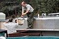 Transferring the fish (16486396696).jpg