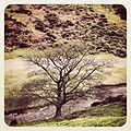 Tree - panoramio (61).jpg