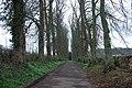 Tree Lined Driveway - geograph.org.uk - 756270.jpg