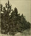 Trees, fruits, and flowers of Minnesota (1904) (14781002884).jpg