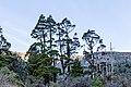 Trees by Cedar Flat Hut, West Coast, New Zealand 02.jpg