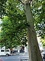 Trees in Odessa, 2019 02.jpg