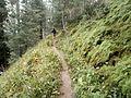 Trekker on Miran Jani Track - panoramio.jpg