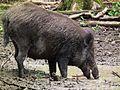 Trockenes Brot wird aufgeweicht Wildpark Alte Fasanerie Juni 2012.JPG