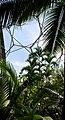 Tropical biodome - geograph.org.uk - 40958.jpg