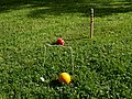 Two Croquet ball, goal and stake.jpg