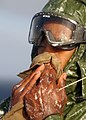 US Navy 040422-N-0715P-044 Airman Apprentice Kevin Tatum wipes Aqueous Film Forming Foam (AFFF) off of his face.jpg