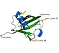 Ubiquitin cartoon-2-.png