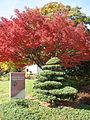 United States National Arboretum 9.JPG