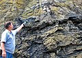 Uranium roll front hosted in Dakota Sandstone (Turkey Creek Road roadcut, Dakota Hogback, near Denver, Colorado, USA) 6.jpg