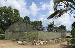 Bayamo - Urban agriculture in Bayamo