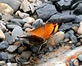 VB 067 Autumnleaf UP.jpg