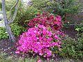 Vert , rose , rouge - panoramio.jpg