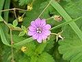 Very pretty flower 1 (5058497626).jpg