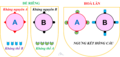 Vi.Nhóm máu ABO (ABO group).png