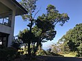 View in front of Unzen Resort Hotel 2.jpg