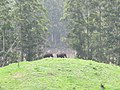 Views around Munnar, Kerala (55).jpg