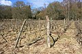 Vines, Mayford - geograph.org.uk - 1778588.jpg